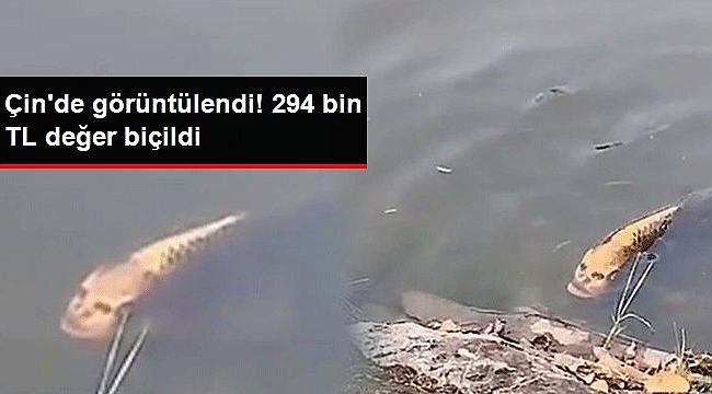 Çin'de insan yüzünü andıran balık görüntülendi! 294 bin TL değer biçildi,