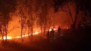 Koronavirüs sebebiyle 3 bini aşkın vatandaşını kaybeden Çin'de orman yangını felaketi: 19 ölü.