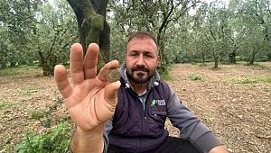 Bursalı çiftçi, tarlasında bulduğu 2200 yıllık sikkeyi müzeye teslim etti.