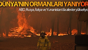 Dünya'nın ormanları yanıyor.